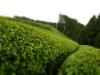 Tee field